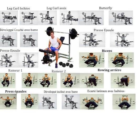 exercice musculation avec banc