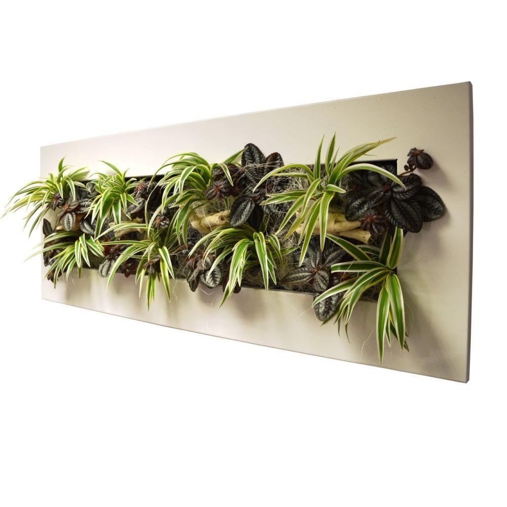 cadre vegetal