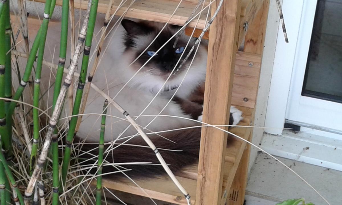 anti fugue chat