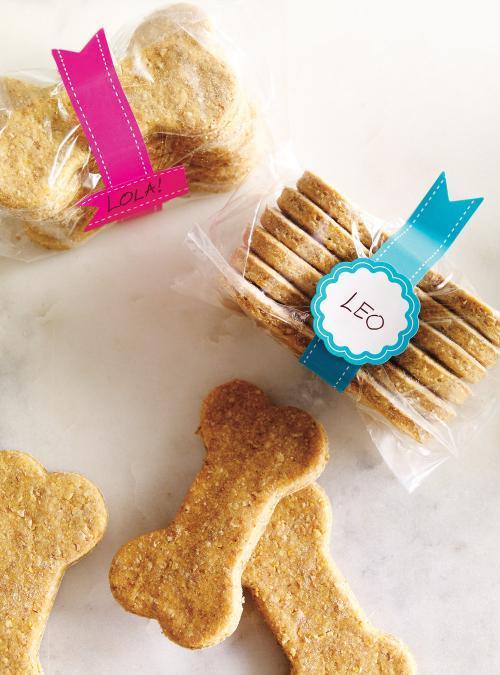biscuit pour chien