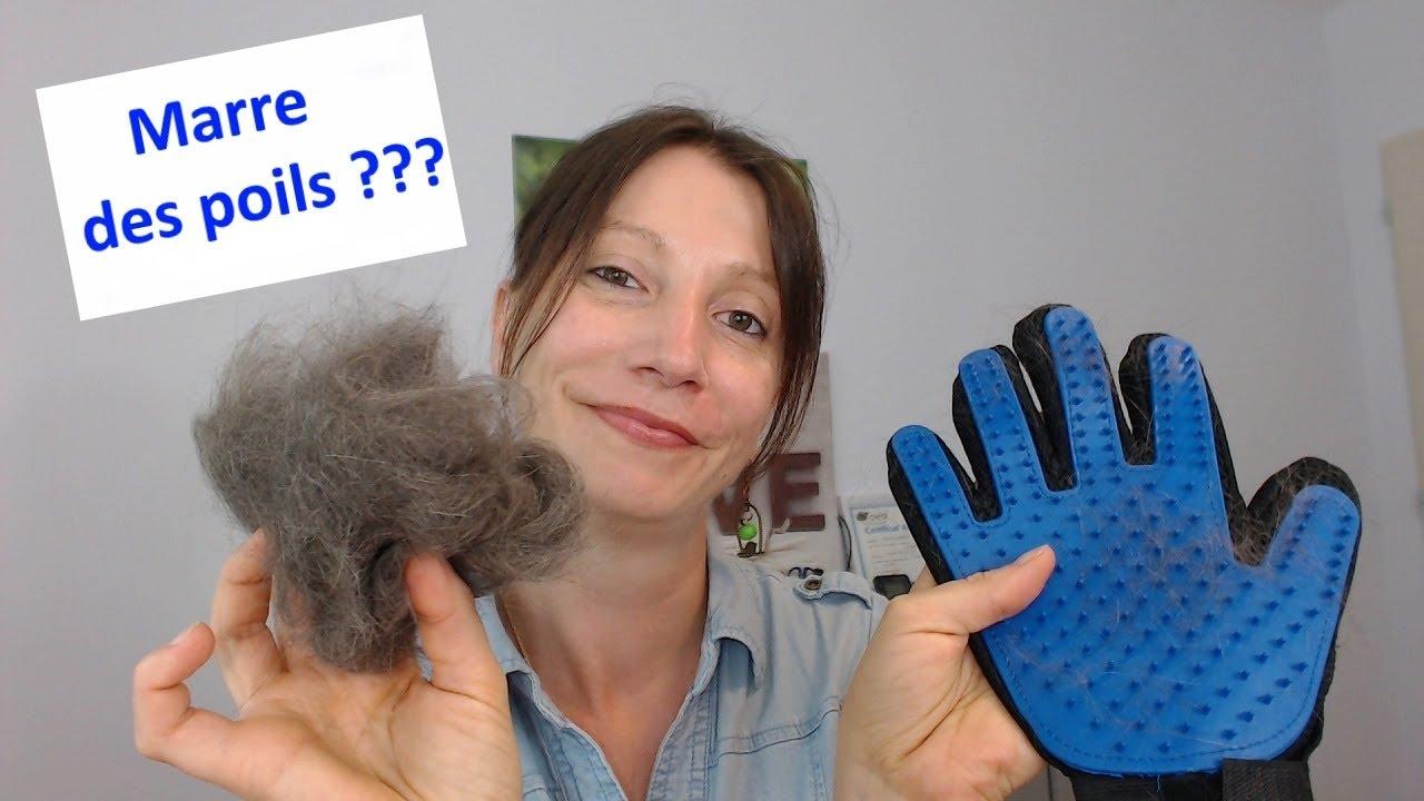 gant magique chat