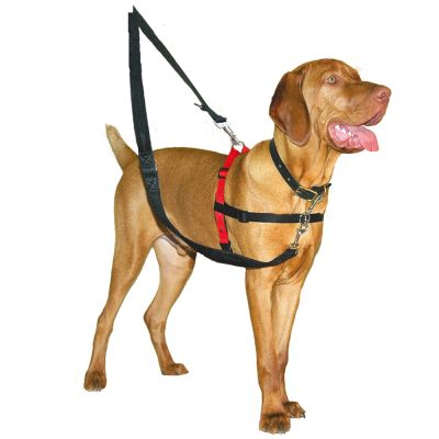 harnais anti traction chien