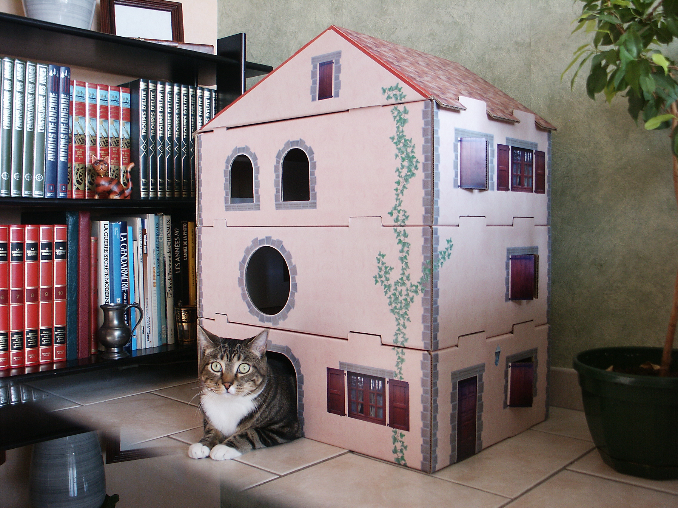 maison a chat