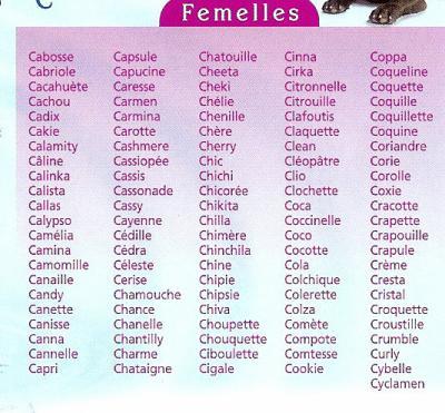nom de chat male