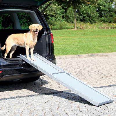 rampe chien