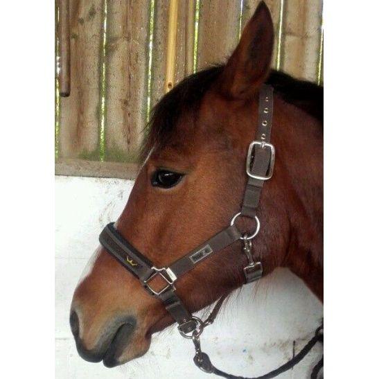 licol poney