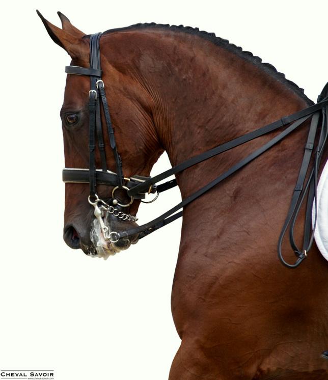 renes cheval